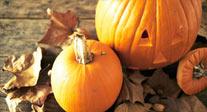 Fall-Harvest-Fest
